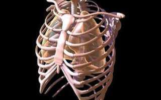 Ложные и истинные ребра строение и расположение у женщин и мужчин