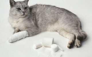 Вывих у кошки сустава или лапы: симптомы лечение причины