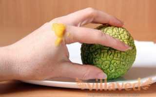 Как хранить адамово яблоко: правила и сроки в домашних условиях Адамово яблоко настойка для